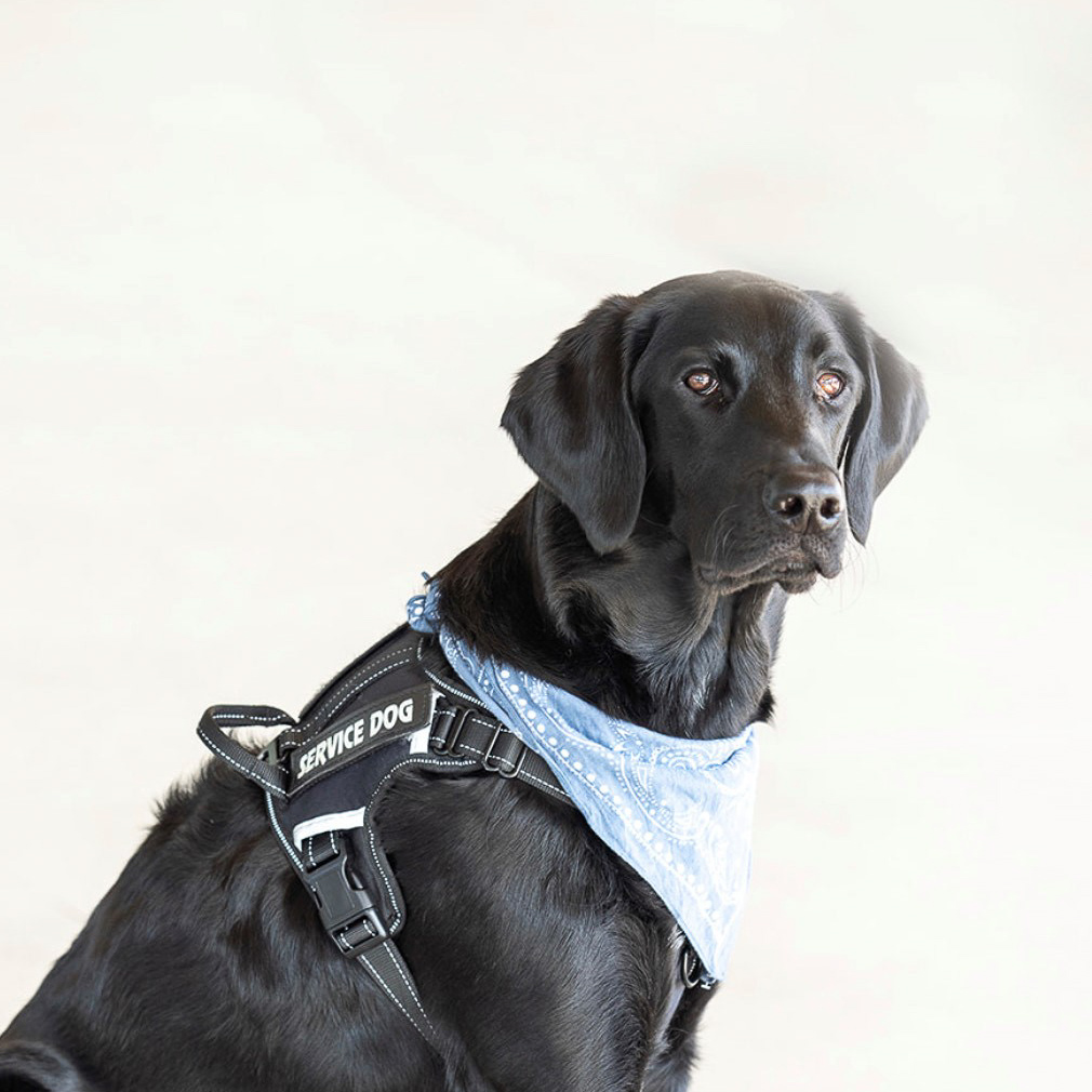 Tucker Office Service Dog